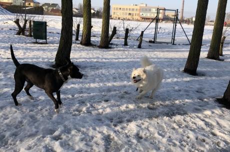 KULK apkalpo arī suņu pastaigu laukumus